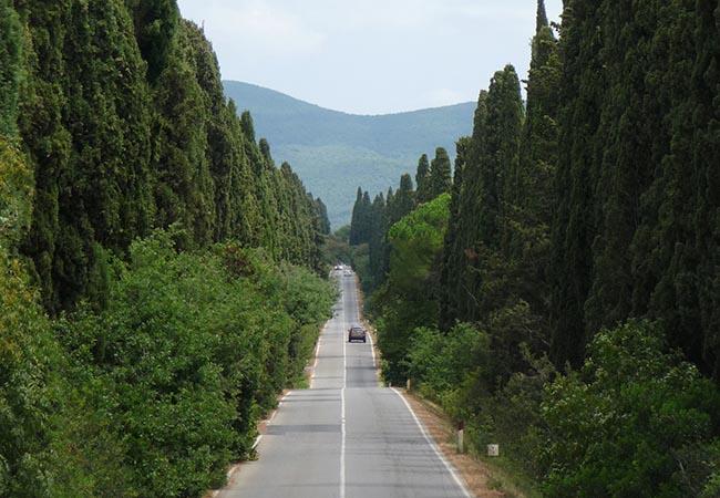 Viale Cipressi di Bolgheri